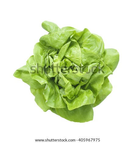 head of lettuce, isolated on white background - stock photo