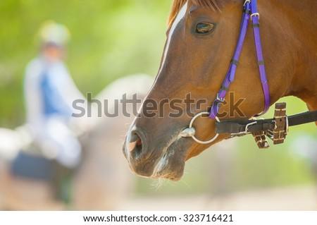 head of racing horse closeup before start - stock photo