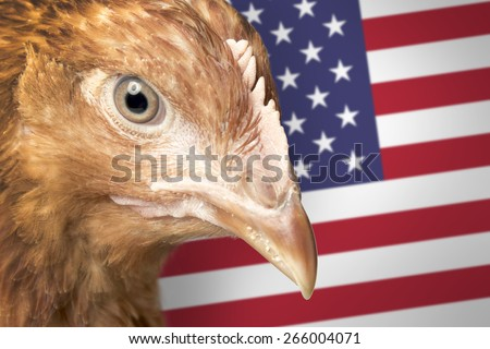 Head of red hen and American flag (aka Eagle) - stock photo