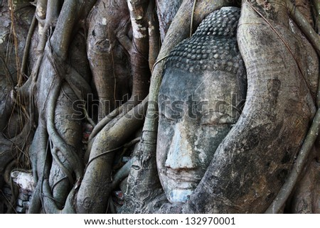 Head of sandstone buddha in the bodhi tree roots at Mahathat temple, Ayutthaya, Thailand - stock photo