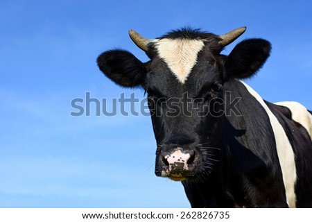Head of the calf against the sky.  - stock photo