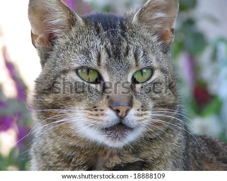 Head of the cat - stock photo