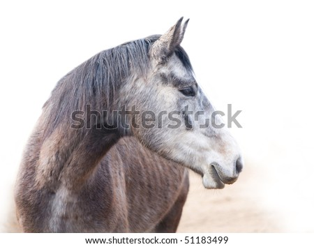 Head of the young grey horse - stock photo
