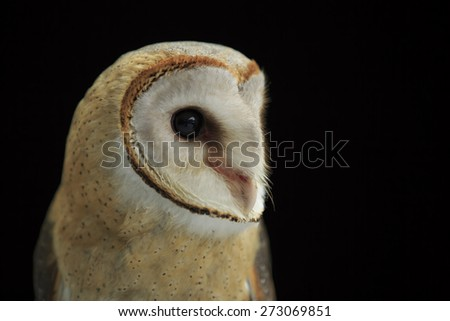 Head shot of a Barn Owl with dark background
