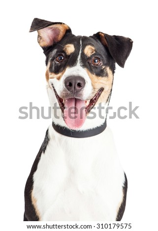 Head shot of a cute and happy mixed breed medium size dog with mouth open and tongue out - stock photo
