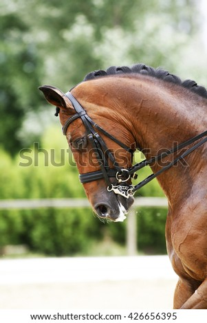 Head shot  of a thoroughbred racehorse with beautiful trappings under saddle during training - stock photo