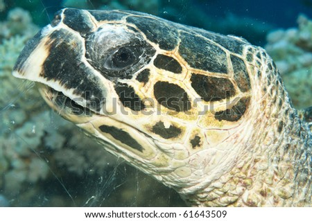 head shot of a turtle - stock photo