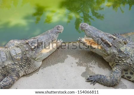 head shot of Thai crocodiles - stock photo