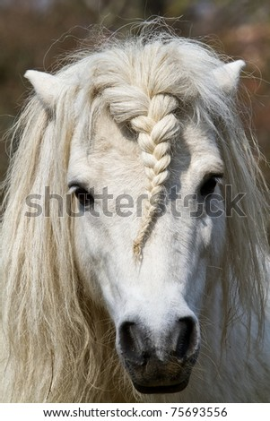 head white horse - stock photo