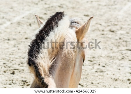 Head with beautiful mane of a small horse, pony. - stock photo