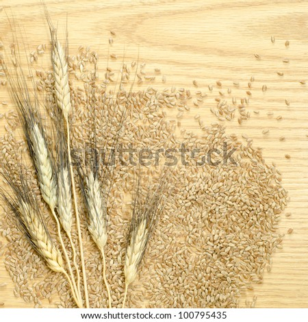 Heads of black bearded wheat laying on a background of wheat kernels on a wooden table top - stock photo