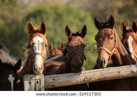 Heads of horses in the pasture. - stock photo