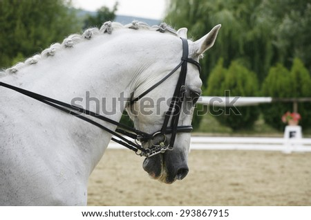 Headshot of a grey dressage sport horse in action - stock photo