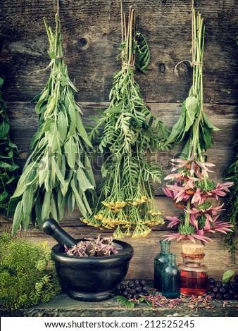 healing herbs, herbal medicine, retro stylized photo - stock photo