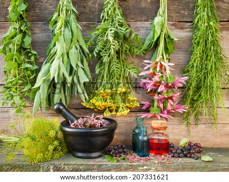 healing herbs on wooden wall, dried plants, herbal medicine - stock photo