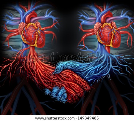 Health agreement medical concept with a group of two human hearts with the red and blue arteries connected together shaped as a hand shake as a symbol of organ and blood donation solutions. - stock photo