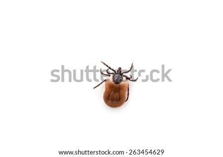 health danger - disease-carrier ticks - stock photo