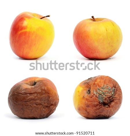 Healthy and rotten apples - stock photo
