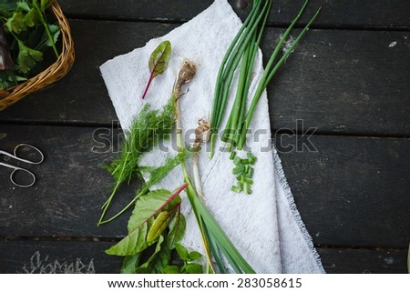 Healthy aromatic herbs for garden over on dark table with vintage linen napkin from above. Rustic style. - stock photo