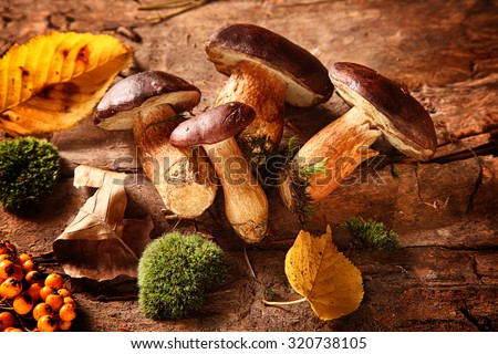 Healthy autumn harvest of fresh woodland fungi with boletus mushrooms and rose hips with moss and colorful fall leaves on a rustic wooden background for seasonal cuisine - stock photo