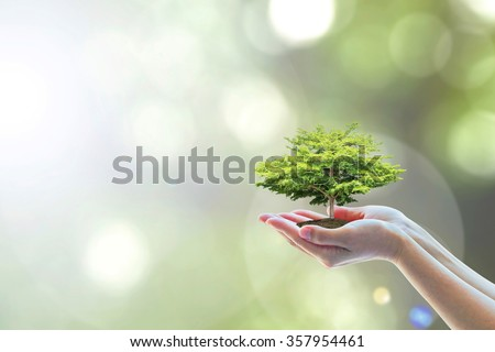 Healthy bio eco tree planting growing on soil woman human hand w/ blur natural green leaves background: Saving tree of life csr concept: Environment/ harmony ecosystem arbor preservation creative idea - stock photo