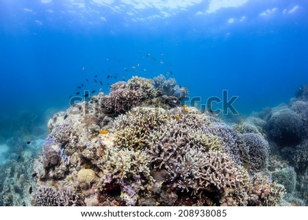 Healthy, colorful tropical coral reef - stock photo