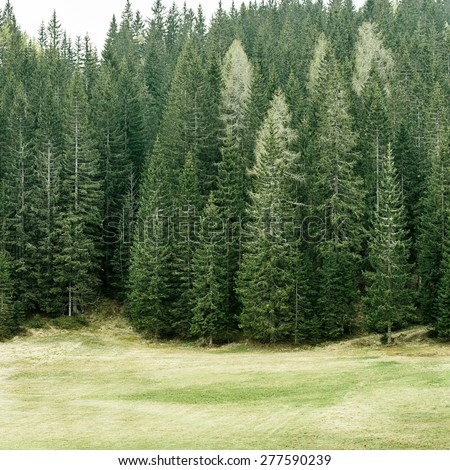 Healthy coniferous trees in forest of old spruce, fir, larch and pine trees in wilderness area with alpine pasture in the foreground. Sustainable industry, ecosystem and healthy environment concepts.  - stock photo