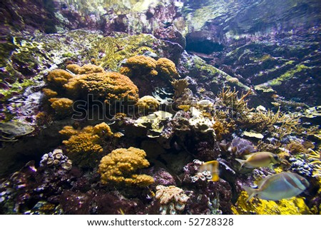 Healthy coral reef - stock photo