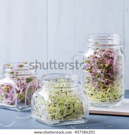 Healthy diet. Fresh Garlic and Radish Sprouts in glass mason jars, standing over blue wooden table. Square image with selective focus - stock photo