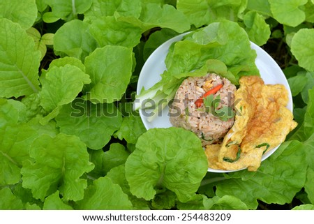 Healthy Food on Green vegetable plot - stock photo