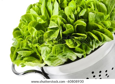 Healthy fresh butter lettuce in a strainer on a white background with copy space - stock photo