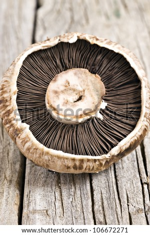 Healthy fresh mushroom with very shallow depth of field - stock photo