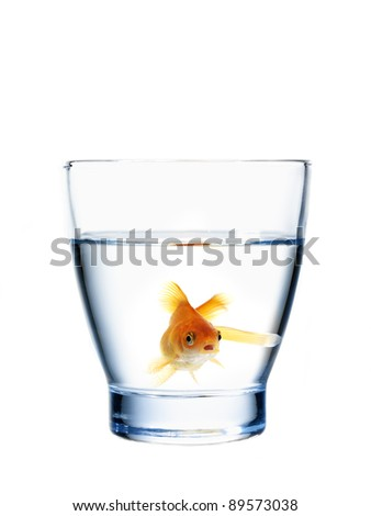 healthy goldfish in a water glass (concept of fresh and healthy water) - stock photo