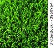 healthy grass - stock photo