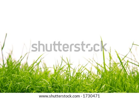 Healthy grass - stock photo