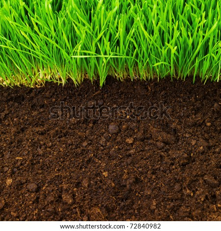 healthy grass growing in soil pattern - stock photo