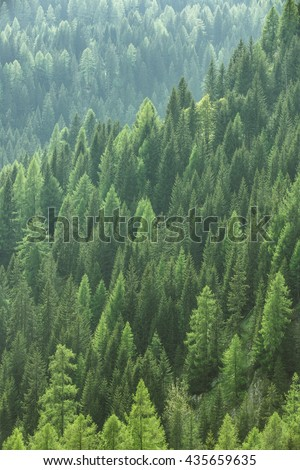 Healthy green trees in a forest of old spruce, fir and pine trees in wilderness of a national park. Sustainable industry, ecosystem and healthy environment concepts and background. - stock photo