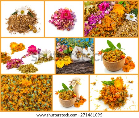 Healthy life collage. Rose, chamomile, marigold, linden, lavender - stock photo