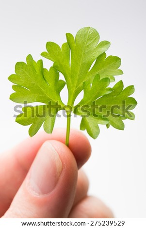 Healthy organic parsley leaf ready for cooking with