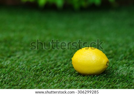 Healthy vegetable food theme: yellow ripe lemon lies on a green grass