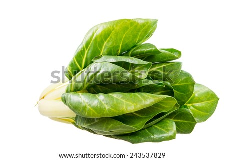Healthy vegetables - isolated fresh mangold plant - stock photo