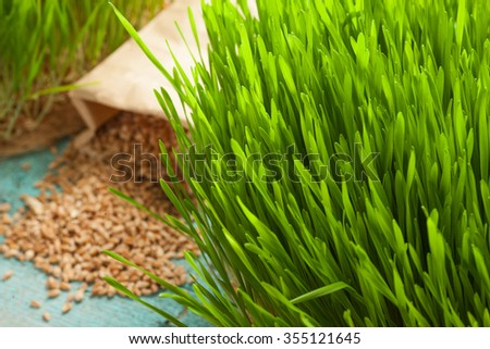 healthy way of life. Enrich your raw diet nutrition with wheat-grass juice. Grow biological wheat seeds.  - stock photo