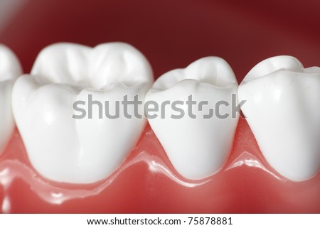 Healthy white human teeth close up. Dentistry.