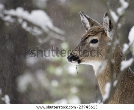 Healthy wild fawn standing in falling snow. - stock photo