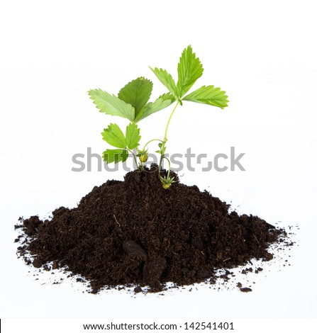 Heap dirt with a green plant on white background