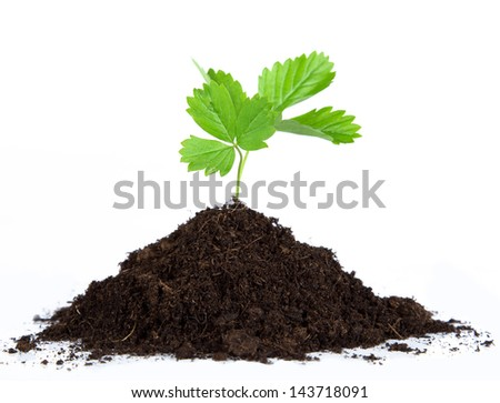 Heap dirt with a green plant on white background - stock photo