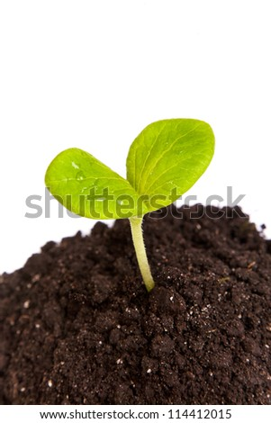 Heap dirt with a green plant sprout isolated on white background - stock photo