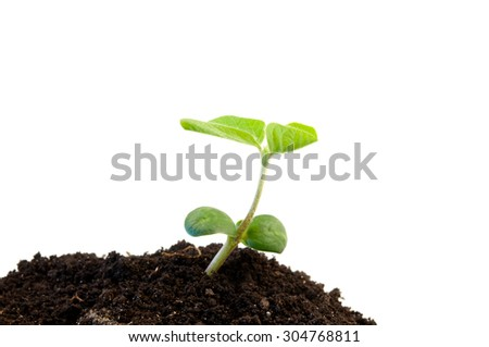 heap dirt with a green soybean sprout isolated on white - stock photo
