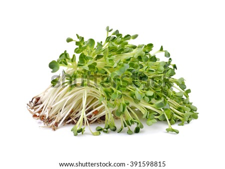 Anita Sands writes about salad                           accessories like SPROUTS