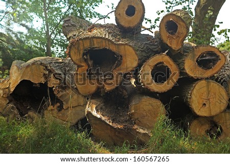 heap of an old cut felled trunks - stock photo